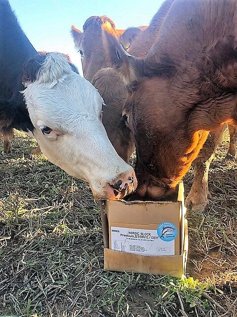 Gi dyrene viktige vitaminer og mineraler på en bærekraftig måte!