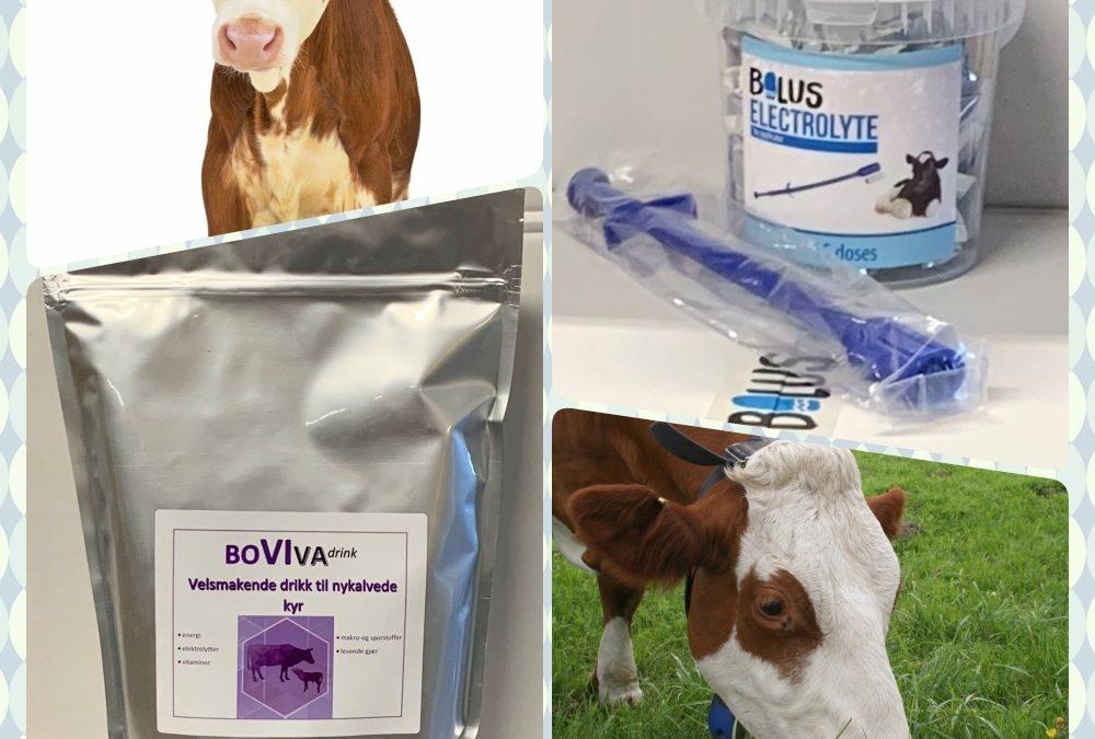 Vi lanserer -Elektrolytt bolus til kalver og -Boviva Drink