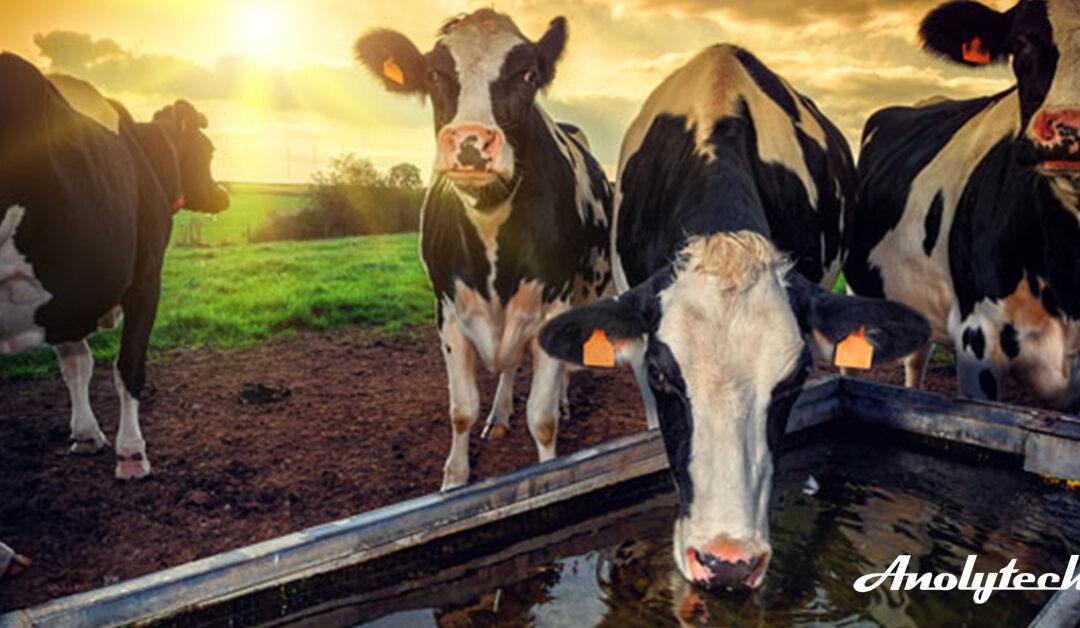 Dyrene trenger en god start og riktig fôring – Her er noe av våre bestselger.